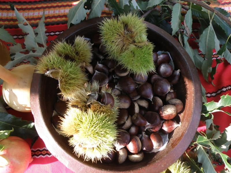 chestnut festival
