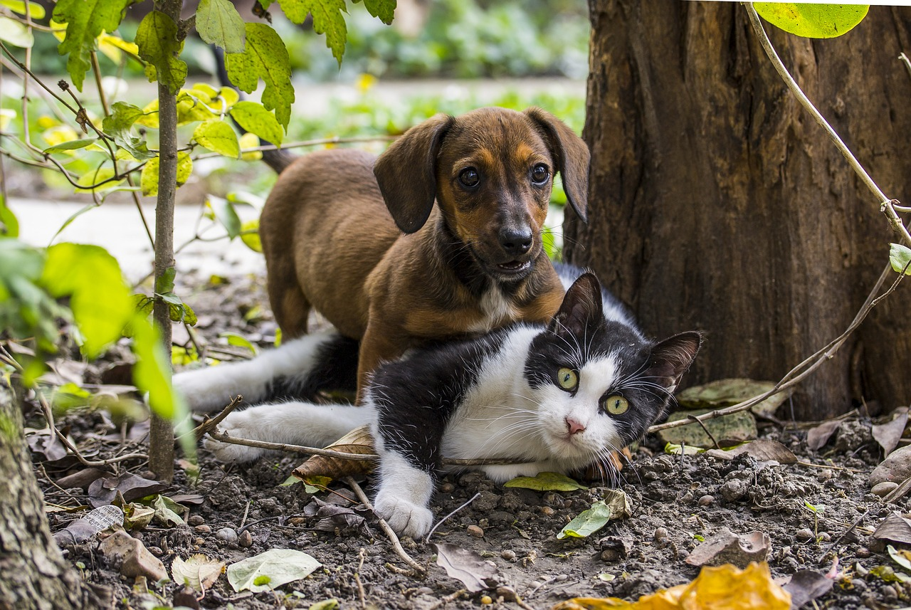 spa hotel cats and dogs Velingrad