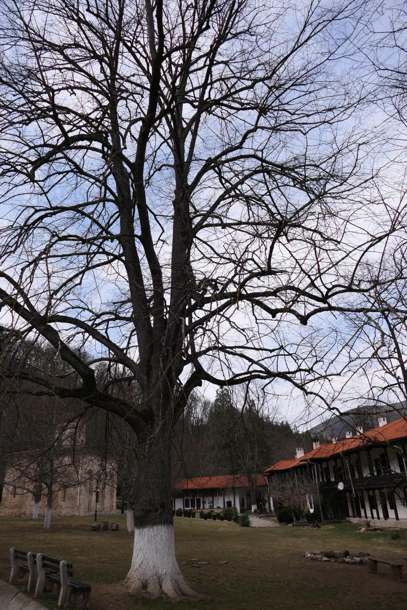 Zemen monastery