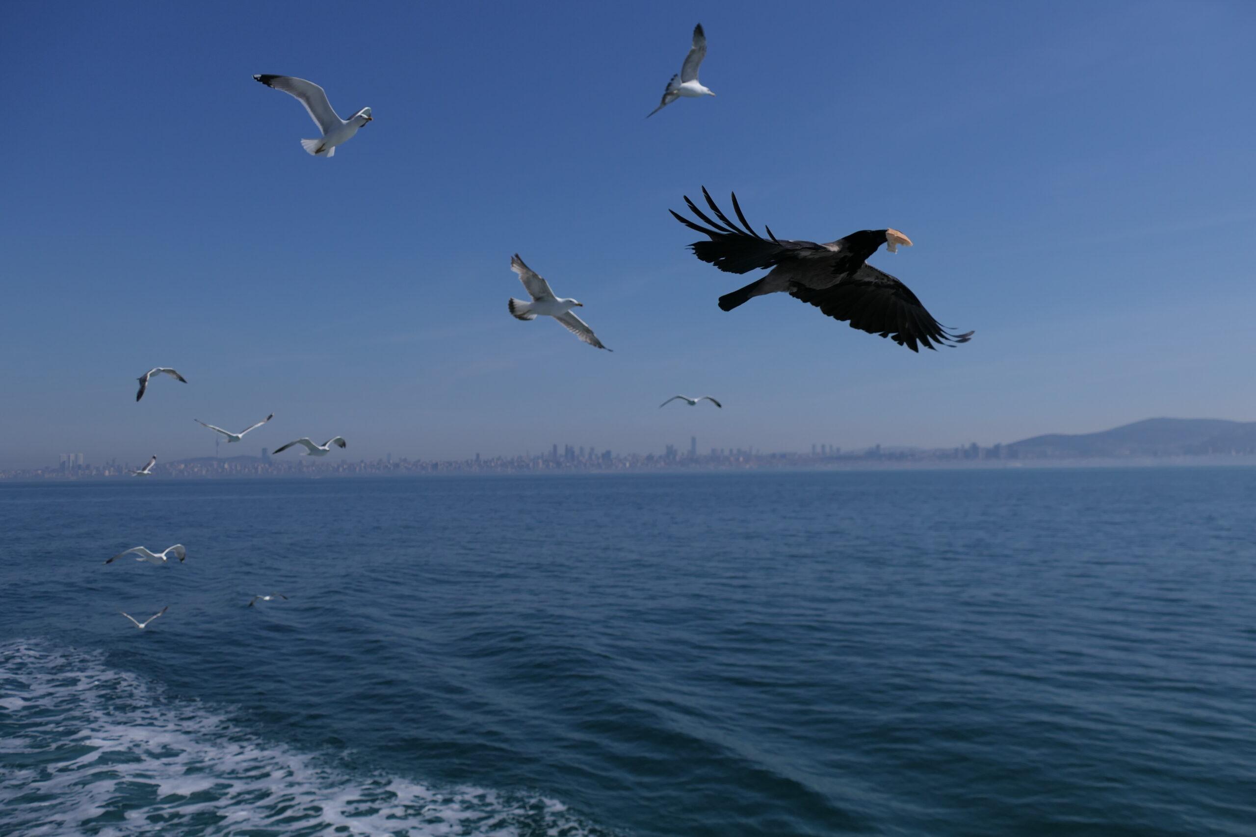 princes islands istanbul turkey